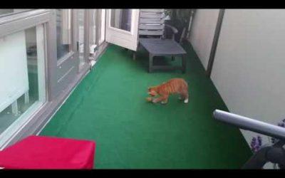 Kenny en zijn muis op het balkon