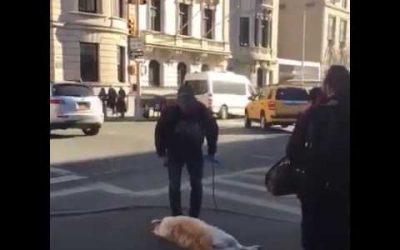 Hond heeft echt geen zin om te lopen