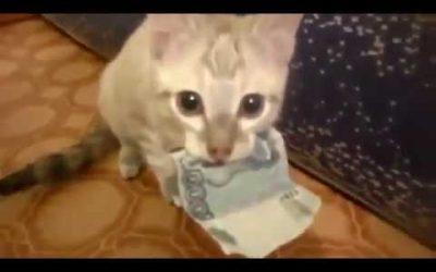 Kat steelt geld en beschermt het