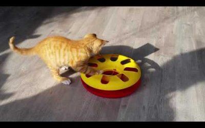 Kitten ontdekt een nieuw speeltje