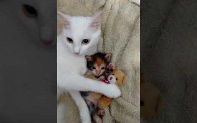 Moederkat beschermd haar kitten