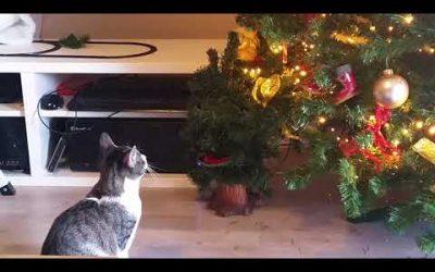 Arie in gevecht met de Kerstboom